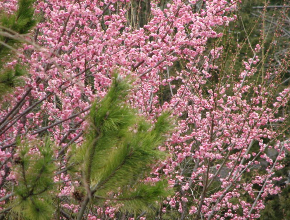 for 10 pine terrace staten island